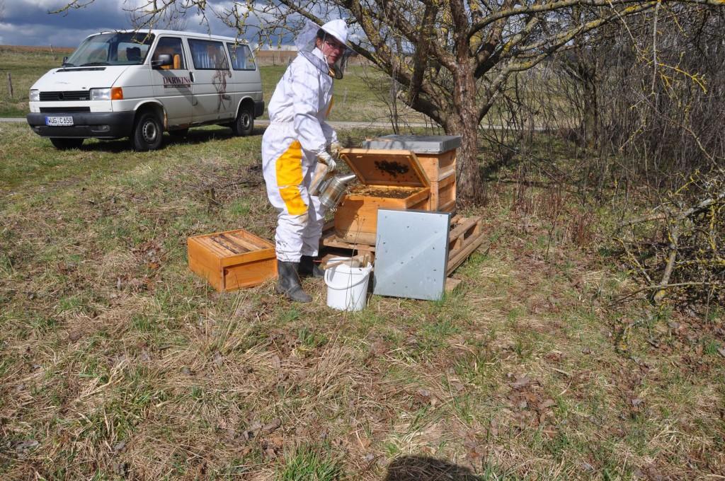 Bei den Bienen 2012